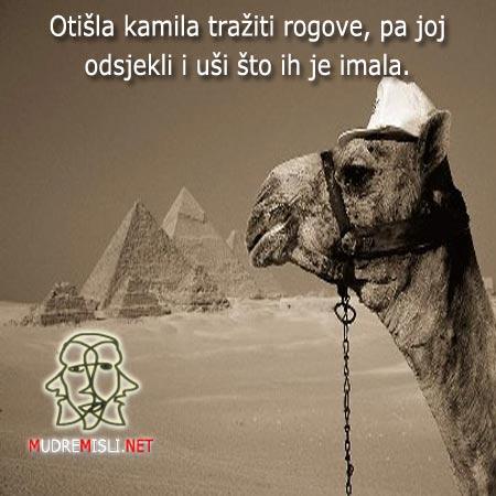 Otišla kamila tražiti rogove, pa joj odsjekli i uši što ih je imala.