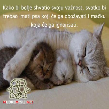 Kako bi bolje shvatao svoju važnost, svako bi trebao imati psa koji će ga obožavati i mačku koja će ga ignorisati.